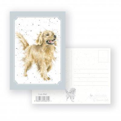 P065 'Golden Boy' Postcard