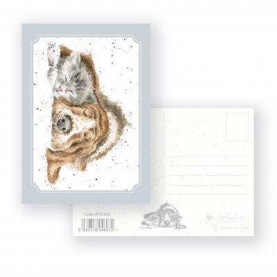 POC012 'Dog-and-Catnap' Postcard
